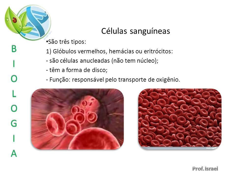 Células sanguíneas São três tipos: 1) Glóbulos vermelhos, hemácias ou eritrócitos: - são células anucleadas (não tem núcleo); - têm a forma de disco;