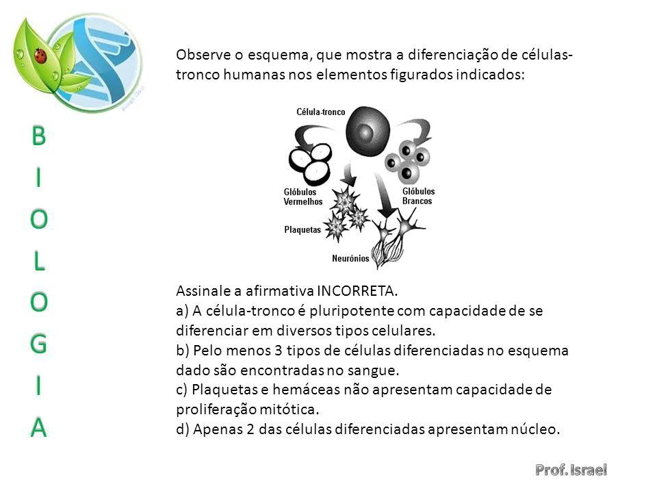 Observe o esquema, que mostra a diferenciação de células- tronco humanas nos elementos figurados indicados: Assinale a afirmativa INCORRETA. a) A célu