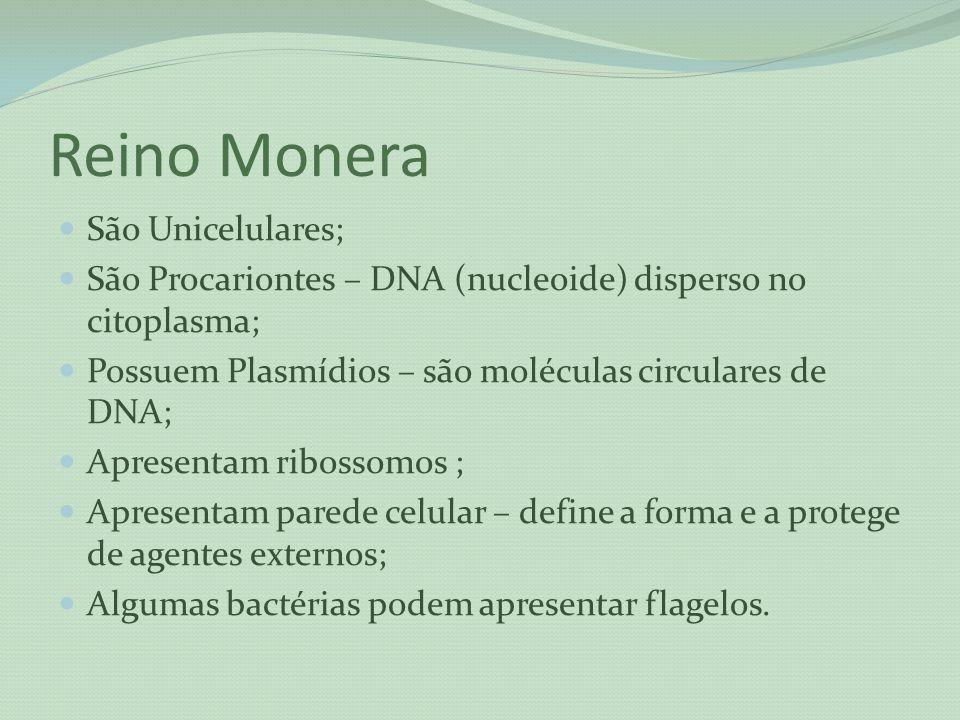 Reino Monera São Unicelulares; São Procariontes – DNA (nucleoide) disperso no citoplasma; Possuem Plasmídios – são moléculas circulares de DNA; Aprese