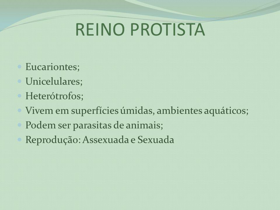 REINO PROTISTA Eucariontes; Unicelulares; Heterótrofos; Vivem em superfícies úmidas, ambientes aquáticos; Podem ser parasitas de animais; Reprodução:
