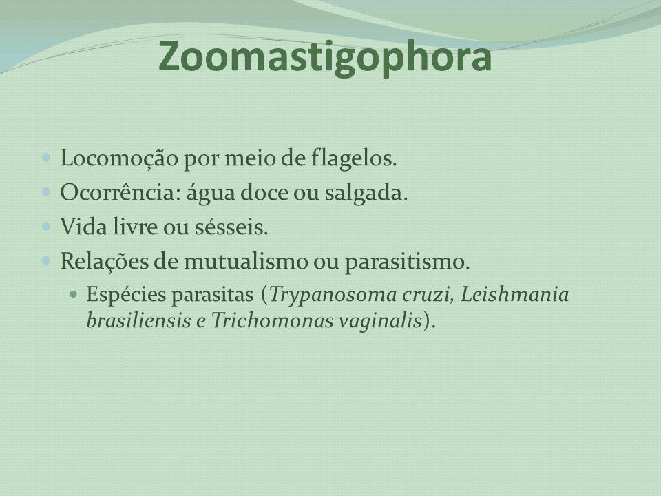 Zoomastigophora Locomoção por meio de flagelos. Ocorrência: água doce ou salgada. Vida livre ou sésseis. Relações de mutualismo ou parasitismo. Espéci