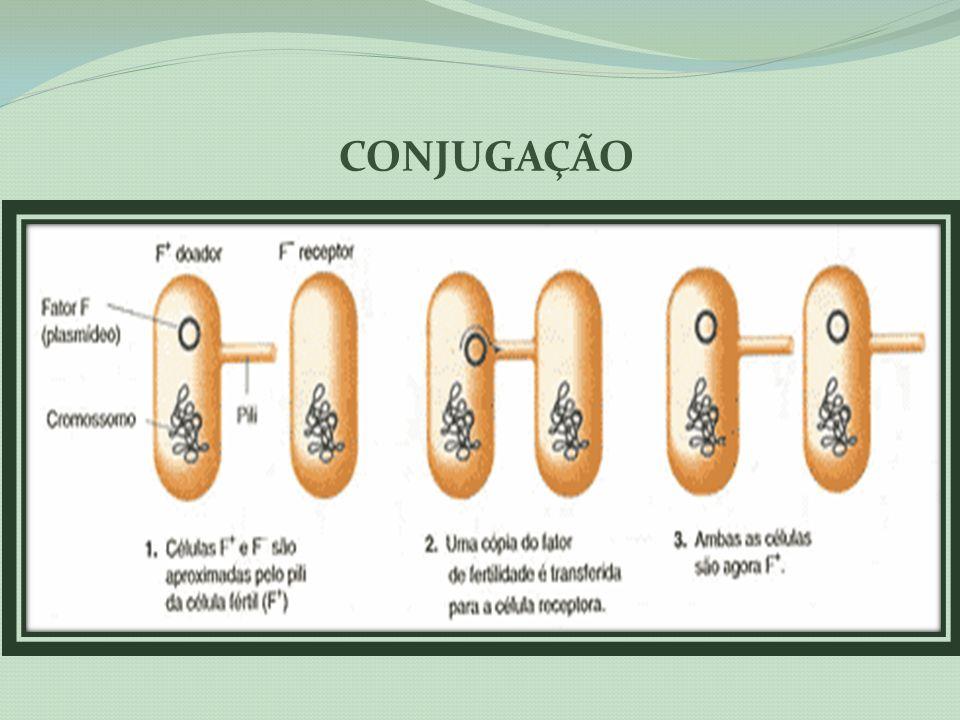 Sífilis congênita É a transmissão da doença de mãe para filho.