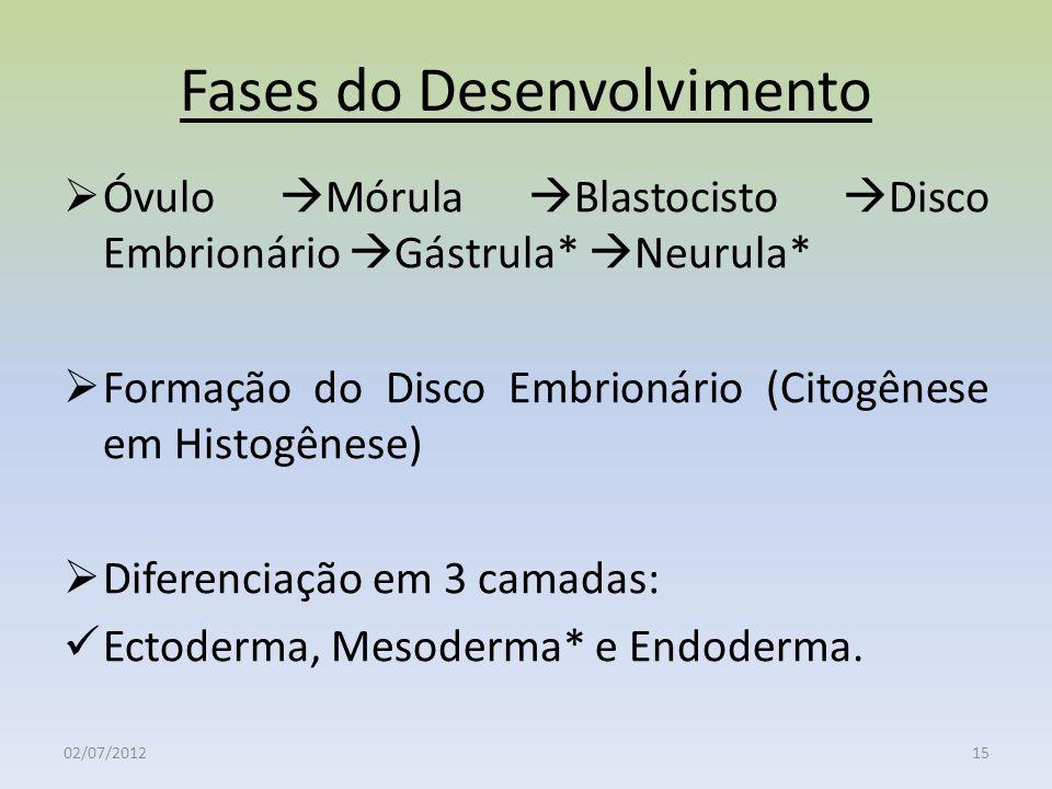 Fases do Desenvolvimento Óvulo Mórula Blastocisto Disco Embrionário Gástrula* Neurula* Formação do Disco Embrionário (Citogênese em Histogênese) Difer