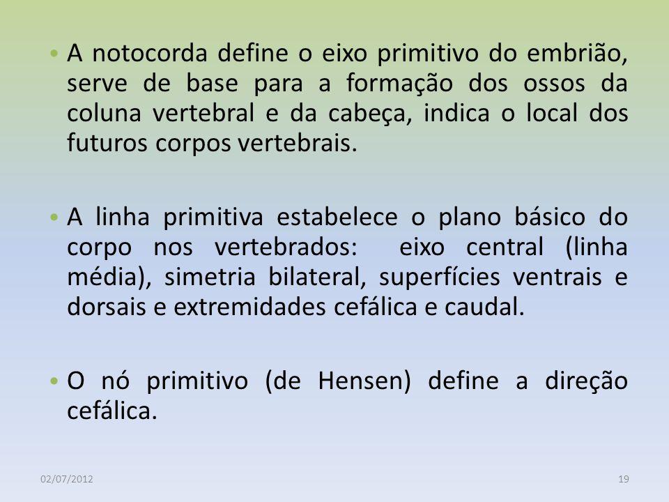 02/07/201219 A notocorda define o eixo primitivo do embrião, serve de base para a formação dos ossos da coluna vertebral e da cabeça, indica o local d