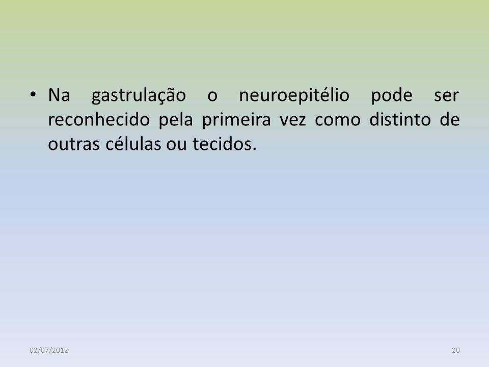 02/07/201220 Na gastrulação o neuroepitélio pode ser reconhecido pela primeira vez como distinto de outras células ou tecidos.
