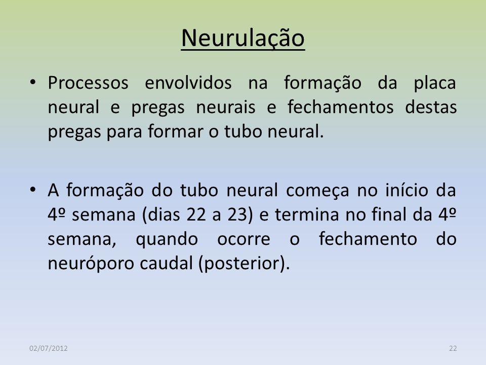 Neurulação 02/07/201222 Processos envolvidos na formação da placa neural e pregas neurais e fechamentos destas pregas para formar o tubo neural. A for