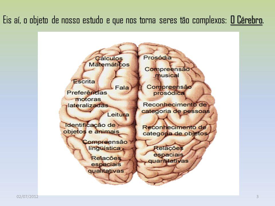 Cérebro Porção mais rostral e mais larga do encéfalo; Dividido ao meio em dois hemisférios cerebrais, separados pela profunda FISSURA SAGITAL; Quanto ao controle das sensações e movimentos: Hemisfério cerebral direito Lado esquerdo do corpo Hemisfério cerebral esquerdo Lado direito do corpo 02/07/201254