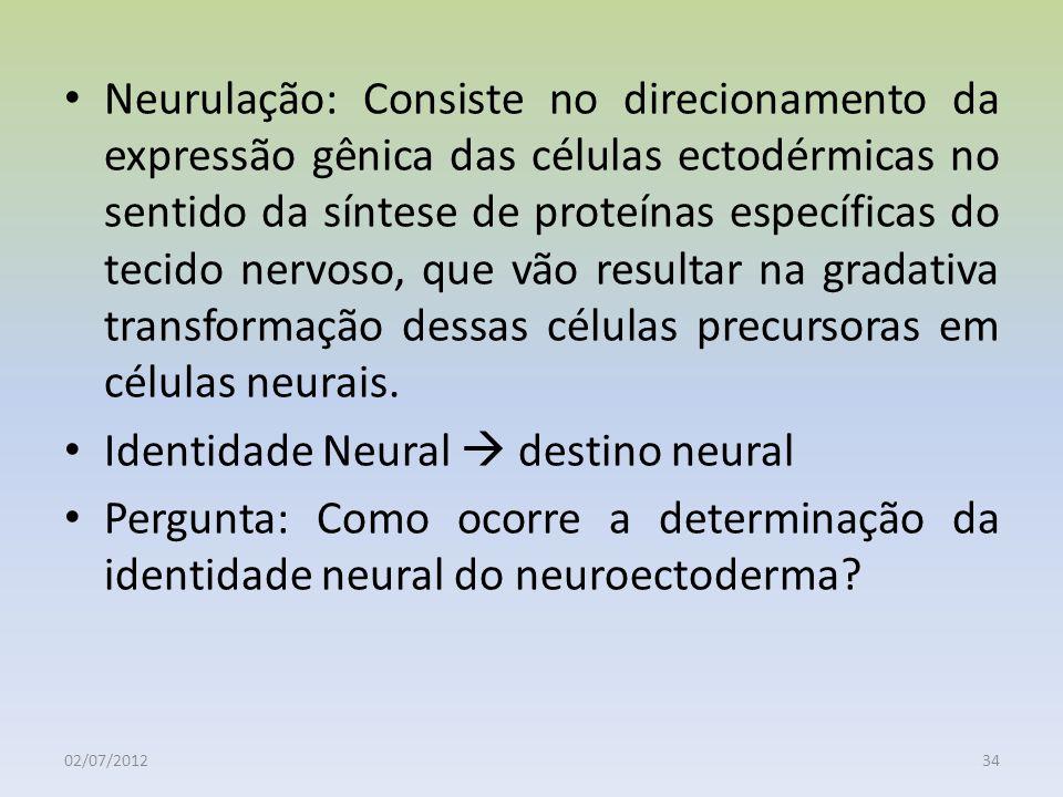 Neurulação: Consiste no direcionamento da expressão gênica das células ectodérmicas no sentido da síntese de proteínas específicas do tecido nervoso,