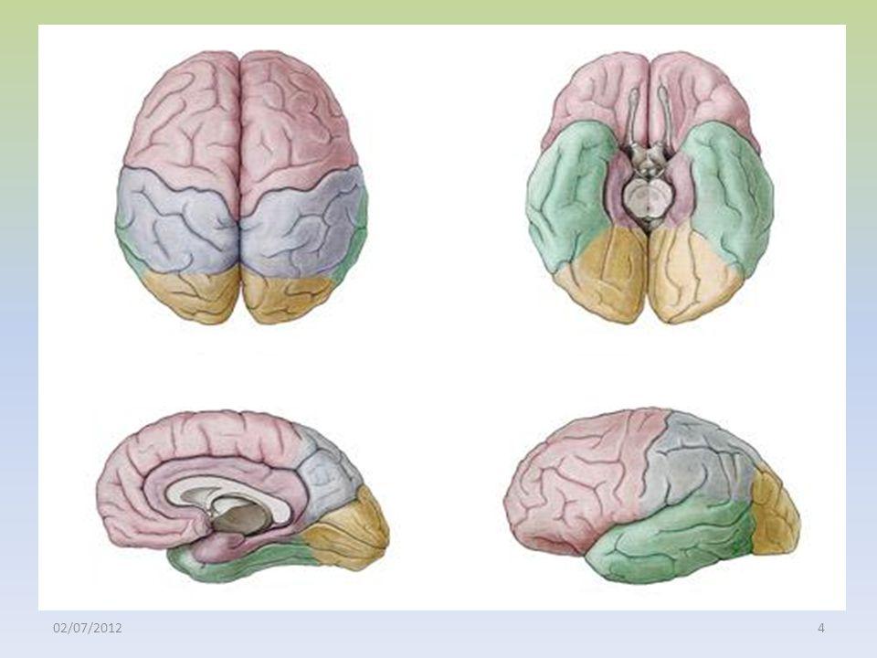 Menkes JH, Sarnat HB, Maria BL, editores.Child Neurology.