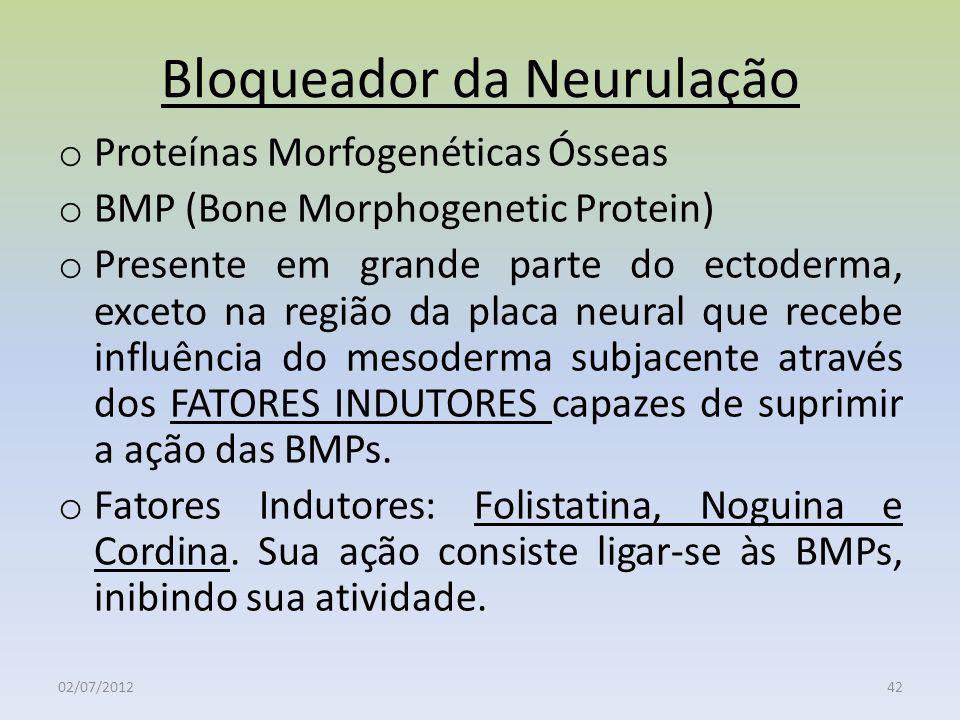 Bloqueador da Neurulação o Proteínas Morfogenéticas Ósseas o BMP (Bone Morphogenetic Protein) o Presente em grande parte do ectoderma, exceto na regiã