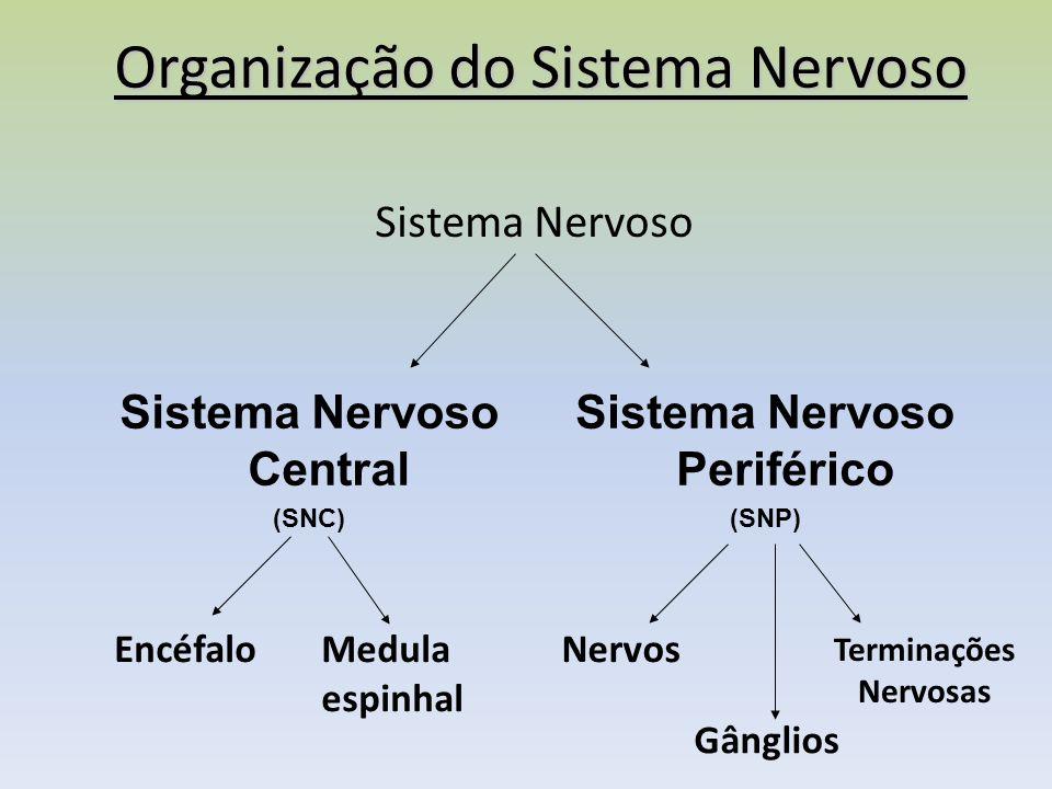 Organização do Sistema Nervoso Sistema Nervoso Sistema Nervoso Central (SNC) Sistema Nervoso Periférico (SNP) EncéfaloMedula espinhal Nervos Gânglios