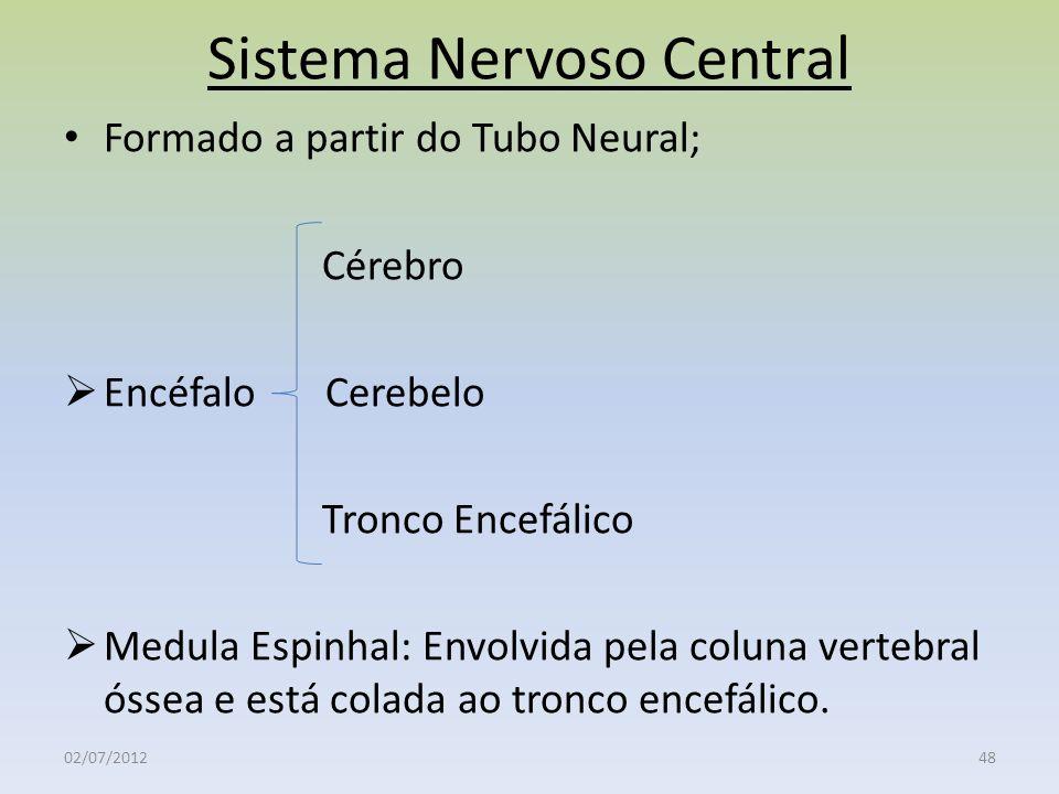 Sistema Nervoso Central Formado a partir do Tubo Neural; Cérebro Encéfalo Cerebelo Tronco Encefálico Medula Espinhal: Envolvida pela coluna vertebral