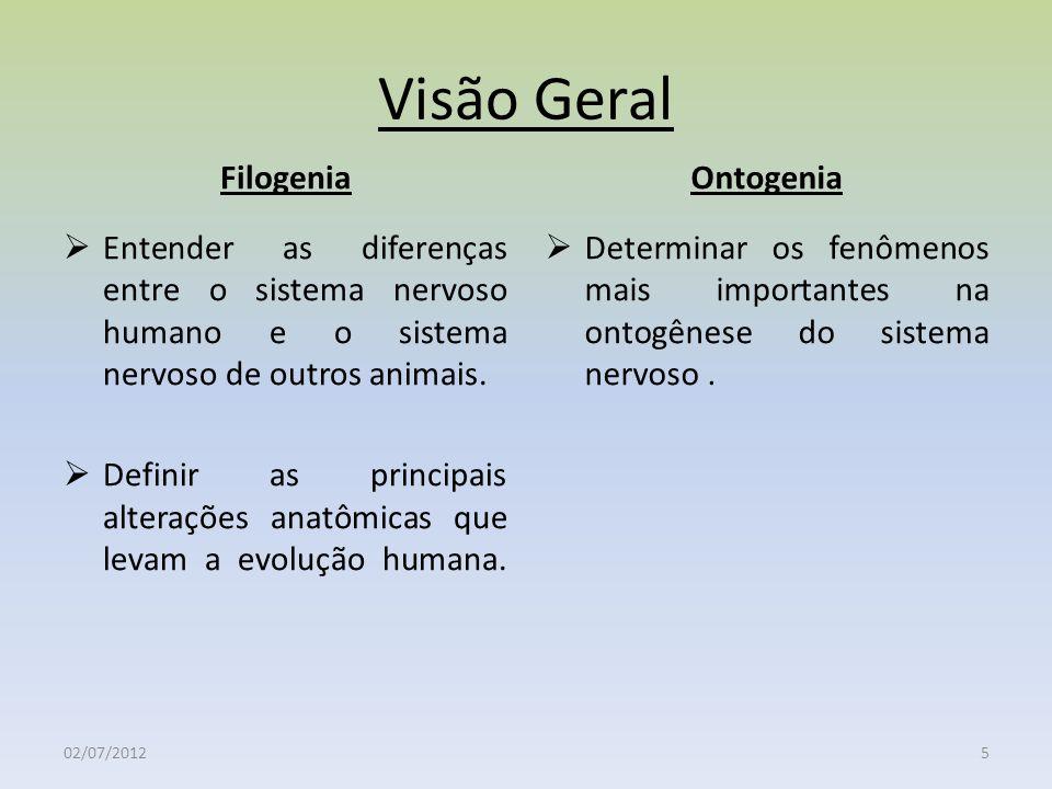 Visão Geral Filogenia Entender as diferenças entre o sistema nervoso humano e o sistema nervoso de outros animais. Definir as principais alterações an