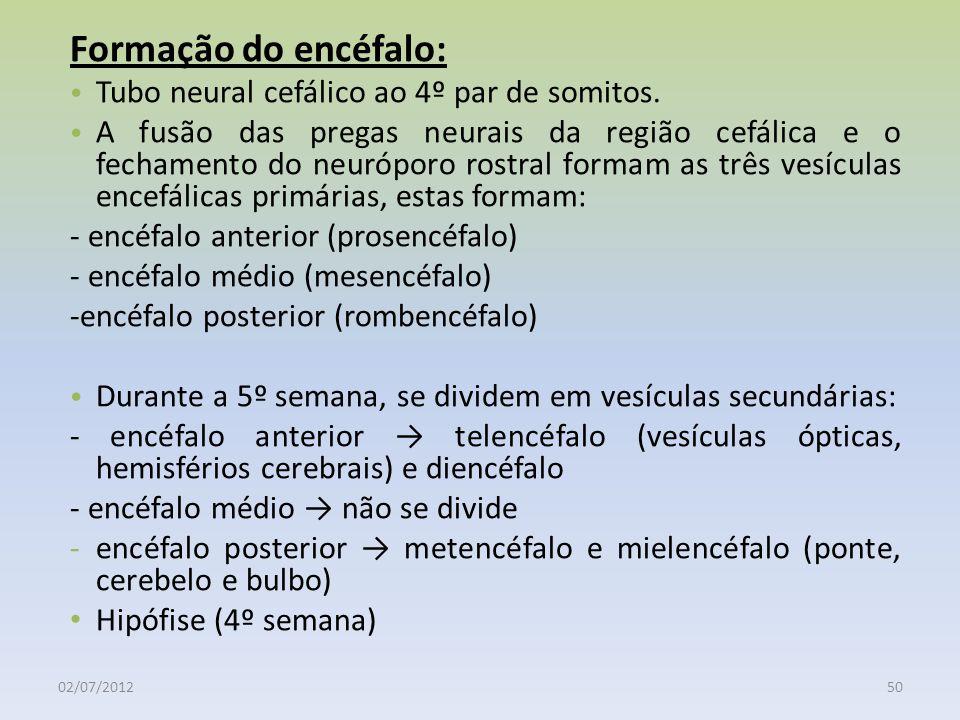 02/07/201250 Formação do encéfalo: Tubo neural cefálico ao 4º par de somitos. A fusão das pregas neurais da região cefálica e o fechamento do neurópor