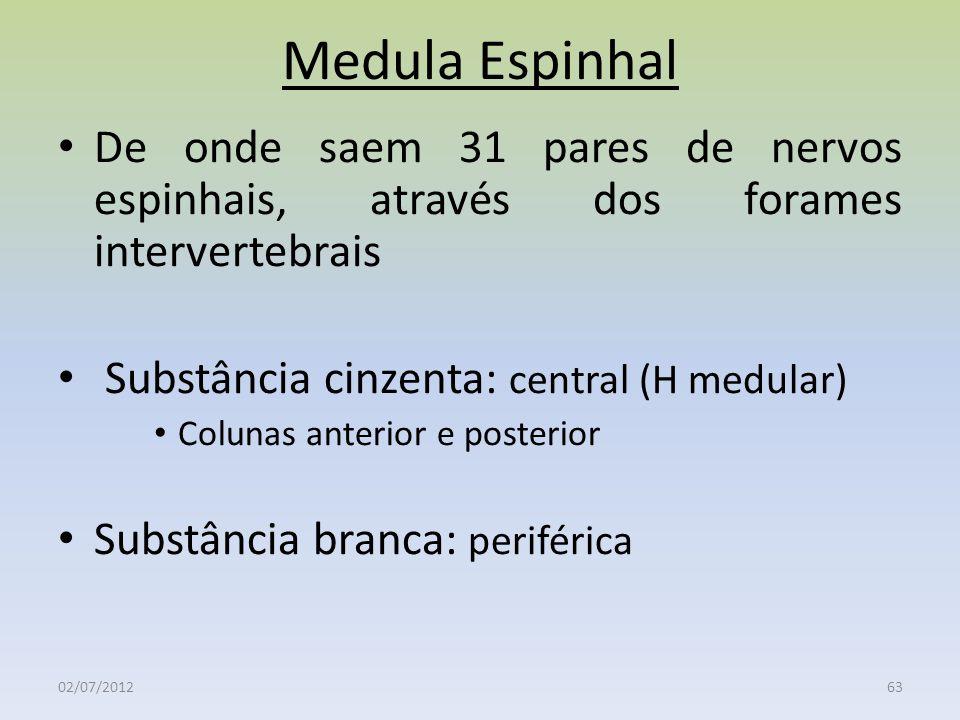 Medula Espinhal 02/07/201263 De onde saem 31 pares de nervos espinhais, através dos forames intervertebrais Substância cinzenta: central (H medular) C
