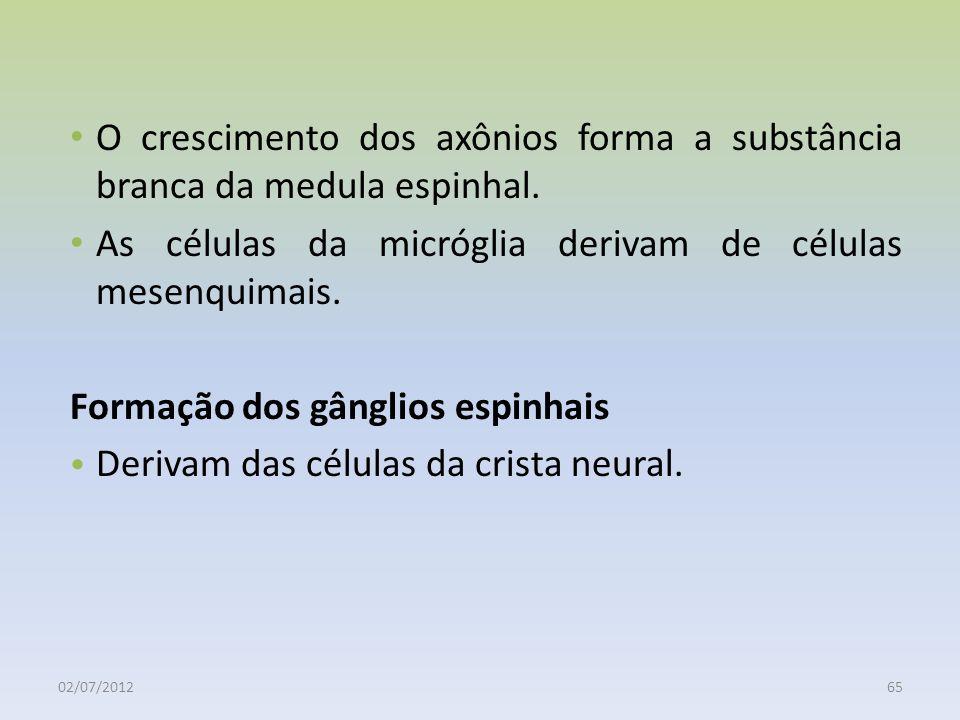02/07/201265 O crescimento dos axônios forma a substância branca da medula espinhal. As células da micróglia derivam de células mesenquimais. Formação