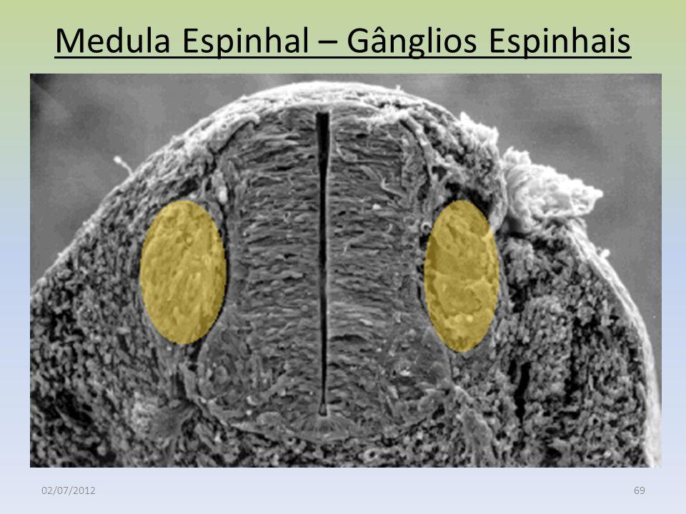 Medula Espinhal – Gânglios Espinhais 02/07/201269