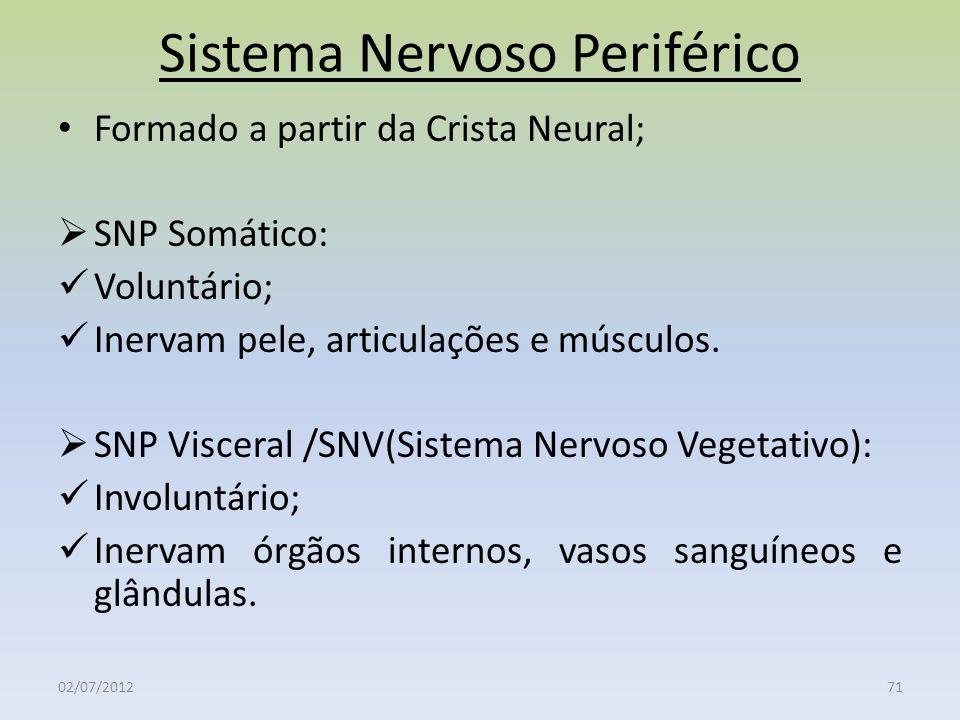 Sistema Nervoso Periférico Formado a partir da Crista Neural; SNP Somático: Voluntário; Inervam pele, articulações e músculos. SNP Visceral /SNV(Siste