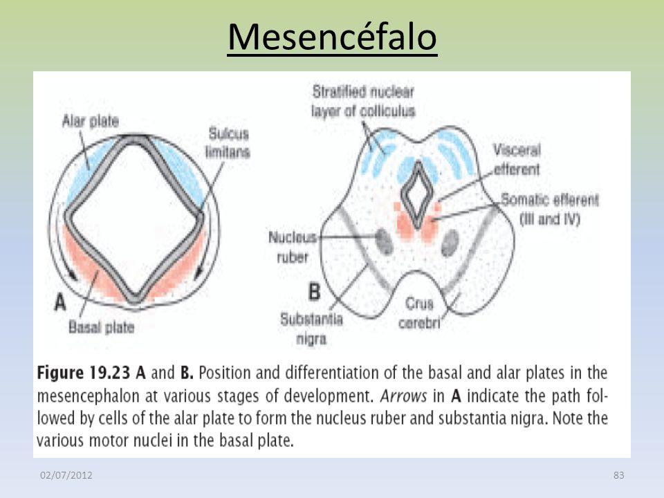 Mesencéfalo 02/07/201283