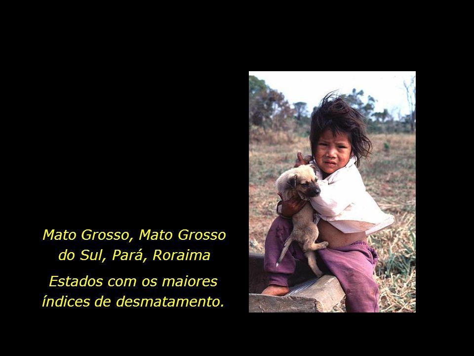 holdemqueen@hotmail.com Menina indígena Guarani, Mato Grosso do Sul