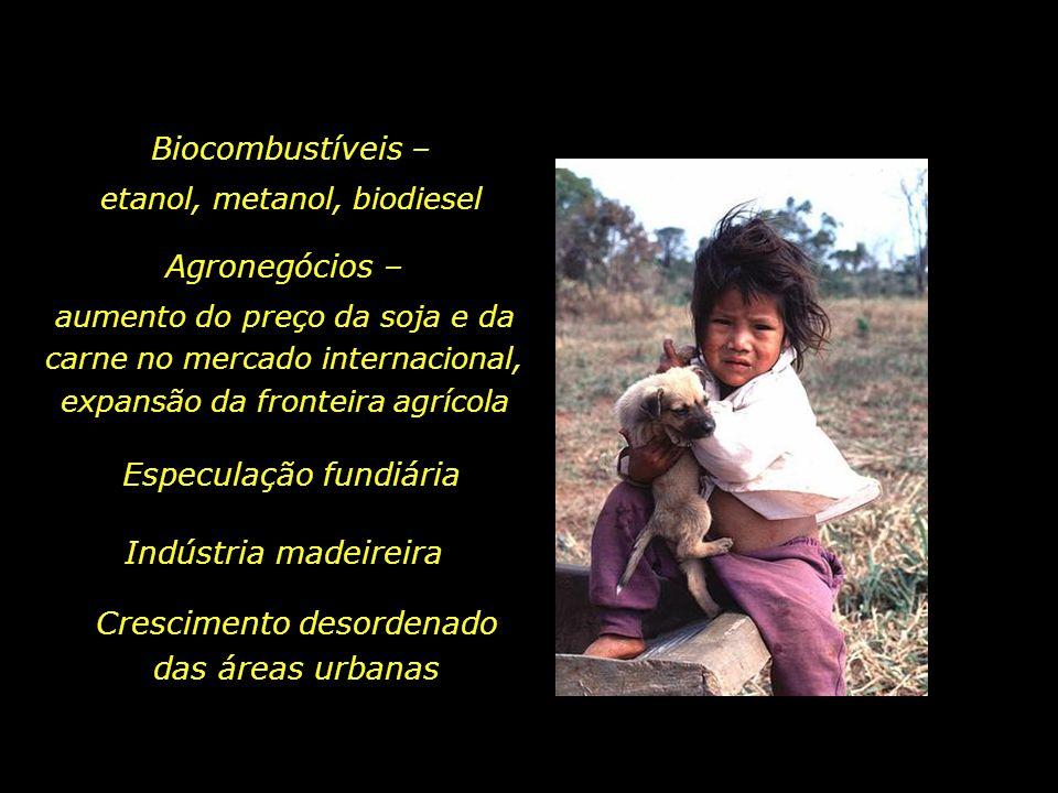 holdemqueen@hotmail.com Mato Grosso, Mato Grosso do Sul, Pará, Roraima Estados com os maiores índices de desmatamento.