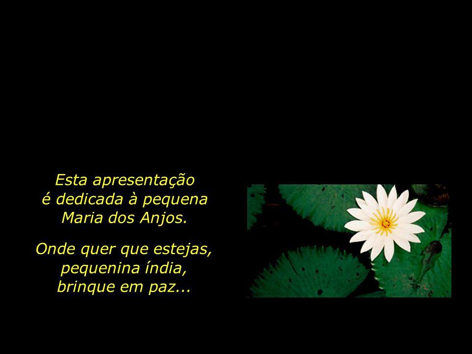 Maio de 2008 Maranhão. Na calada da noite, dois homens armados invadem a aldeia Anajá, dos índios guajajaras, e começam a atirar aleatoriamente. Uma m