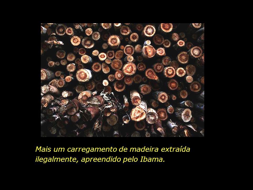 holdemqueen@hotmail.com Vista aérea de rebanho bovino. Município de Cáceres, Mato Grosso