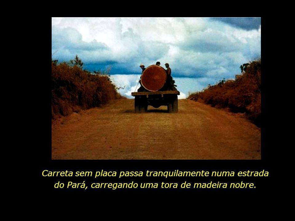 holdemqueen@hotmail.com Voraz expansão das fronteiras agrícolas. Mato Grosso