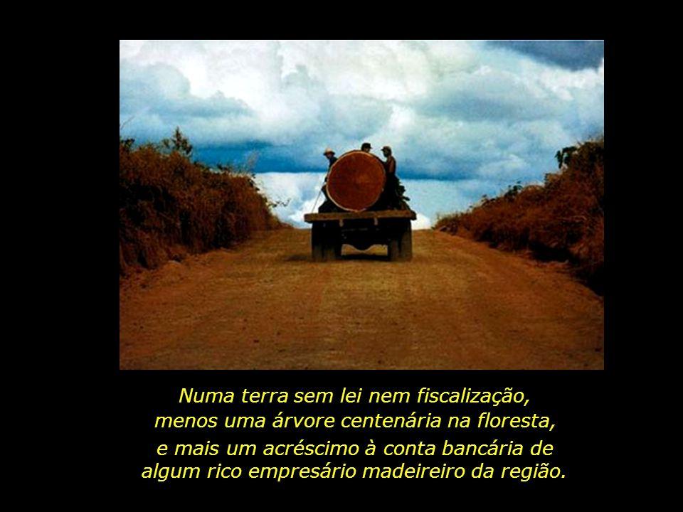 holdemqueen@hotmail.com Carreta sem placa passa tranquilamente numa estrada do Pará, carregando uma tora de madeira nobre.