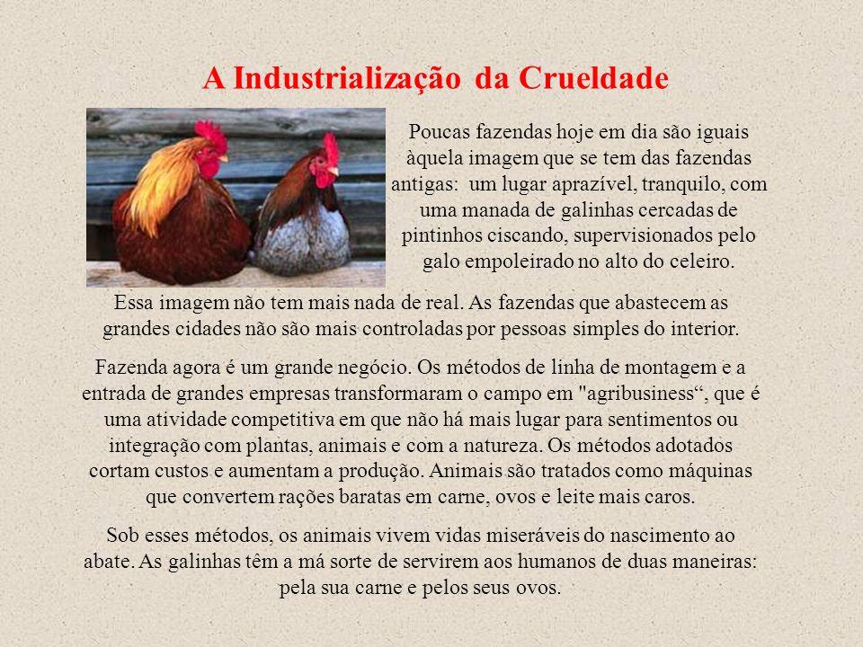 PRODUÇÃO DE OVOS DE GRANJA Rildo Silveira Created by Primeiro foi necessário civilizar o homem em relação ao próprio homem. Agora é necessário civiliz