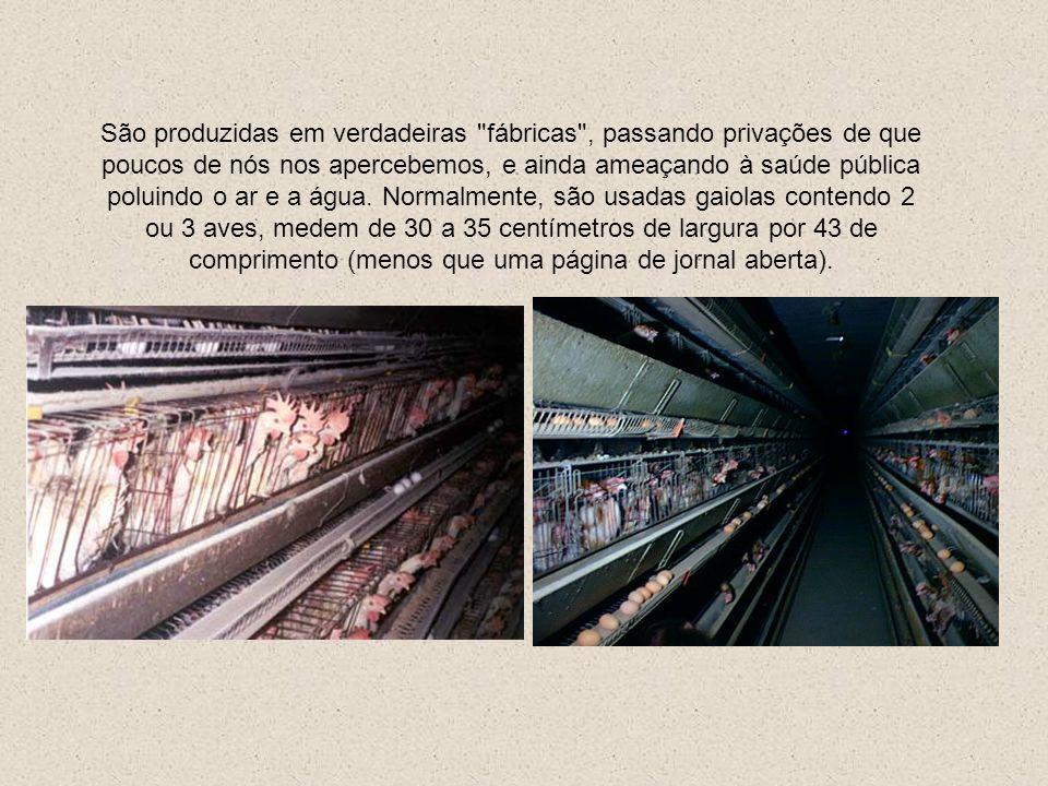 CRIAÇÃO INTENSIVA As galinhas poedeiras passam a vida inteira sem poder se locomover devido ao minúsculo tamanho das suas celas, pisando em fios de ar