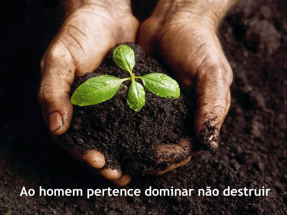 A riqueza da terra e dos mares tem um destino universal O criador tudo criou para todos