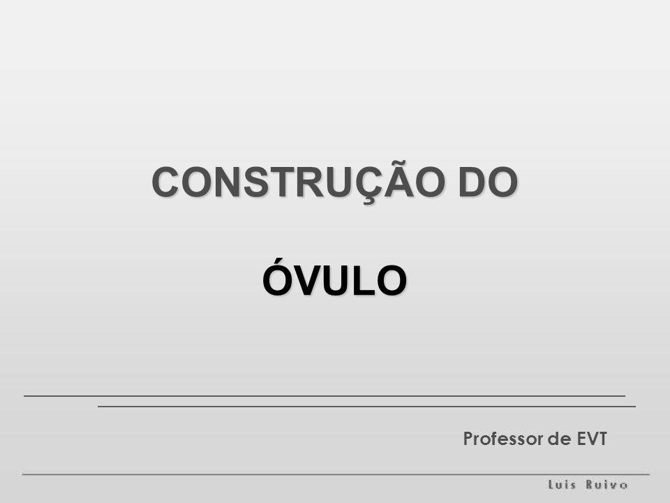 Professor de EVT CONSTRUÇÃO DO ÓVULO