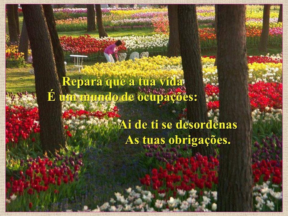 E, desse modo trabalha, Tecendo a paz do teu ninho. É a cerca que te garante Tanto o lar, como o caminho.