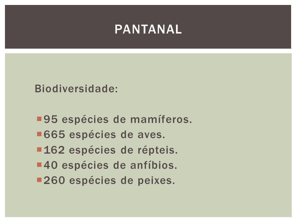 Biodiversidade: 95 espécies de mamíferos. 665 espécies de aves. 162 espécies de répteis. 40 espécies de anfíbios. 260 espécies de peixes. PANTANAL