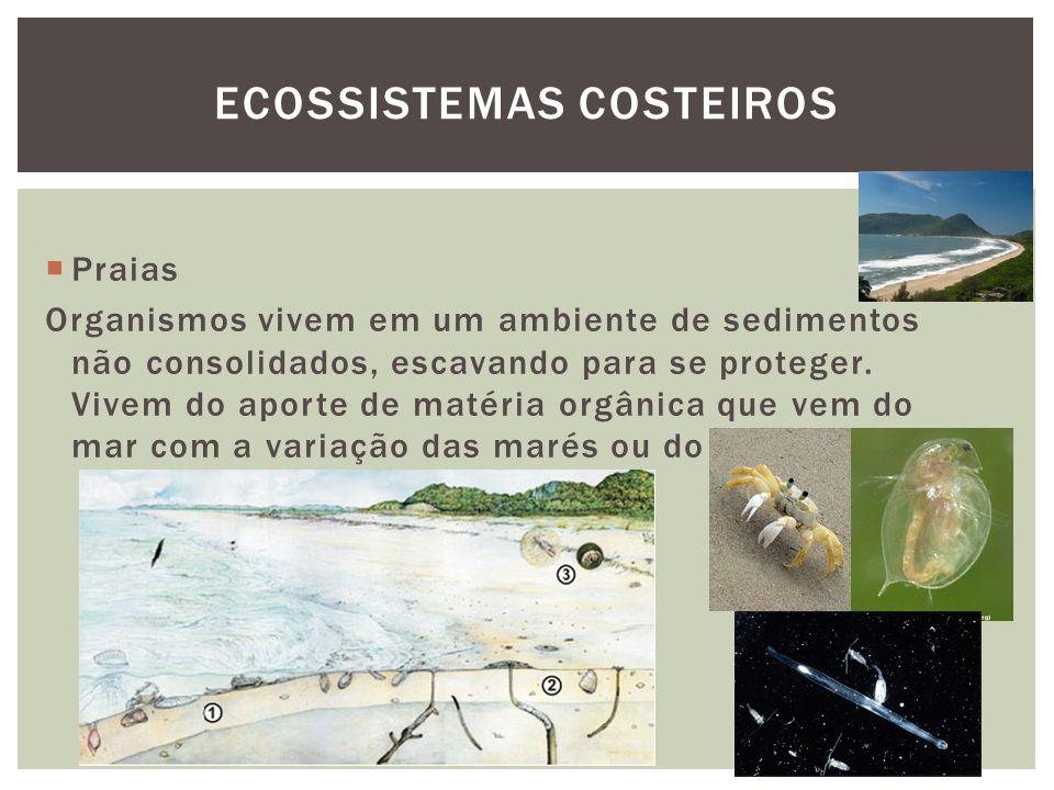 Praias Organismos vivem em um ambiente de sedimentos não consolidados, escavando para se proteger. Vivem do aporte de matéria orgânica que vem do mar
