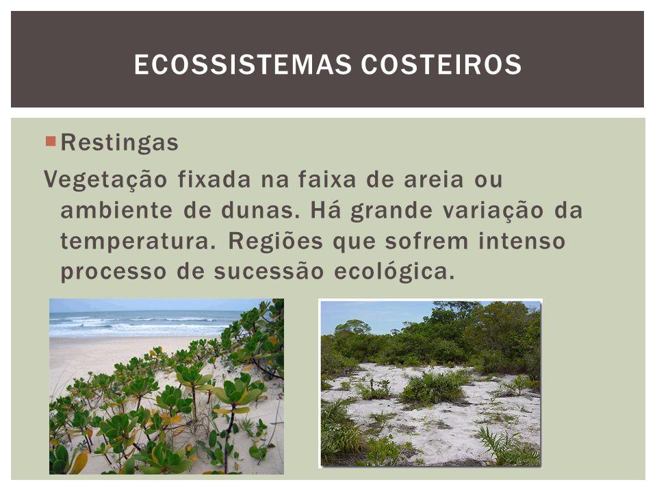 Restingas Vegetação fixada na faixa de areia ou ambiente de dunas. Há grande variação da temperatura. Regiões que sofrem intenso processo de sucessão