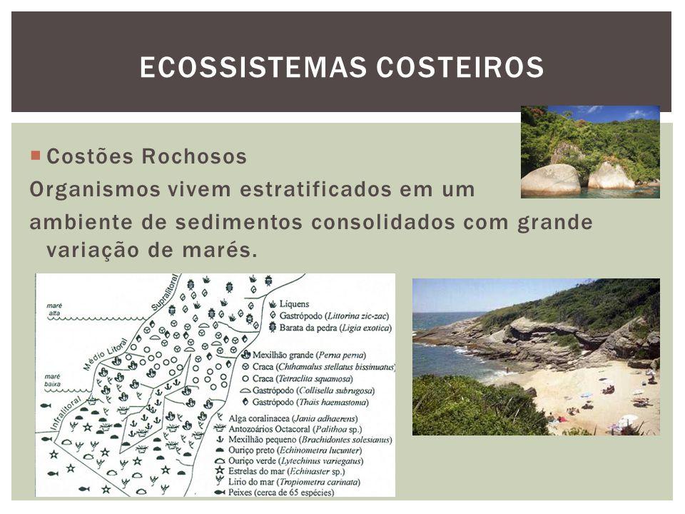 Costões Rochosos Organismos vivem estratificados em um ambiente de sedimentos consolidados com grande variação de marés. ECOSSISTEMAS COSTEIROS