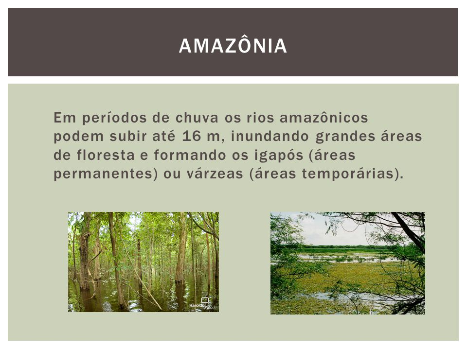 Em períodos de chuva os rios amazônicos podem subir até 16 m, inundando grandes áreas de floresta e formando os igapós (áreas permanentes) ou várzeas
