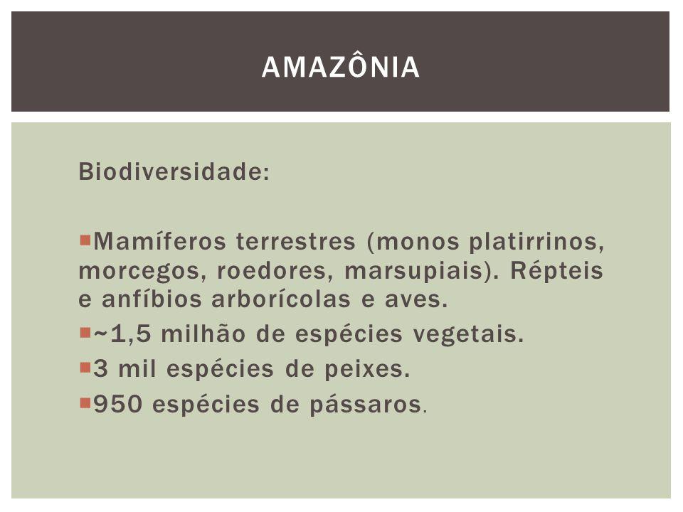 Biodiversidade: Mamíferos terrestres (monos platirrinos, morcegos, roedores, marsupiais). Répteis e anfíbios arborícolas e aves. ~1,5 milhão de espéci