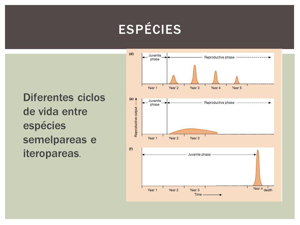 Diferentes ciclos de vida entre espécies semelpareas e iteropareas.