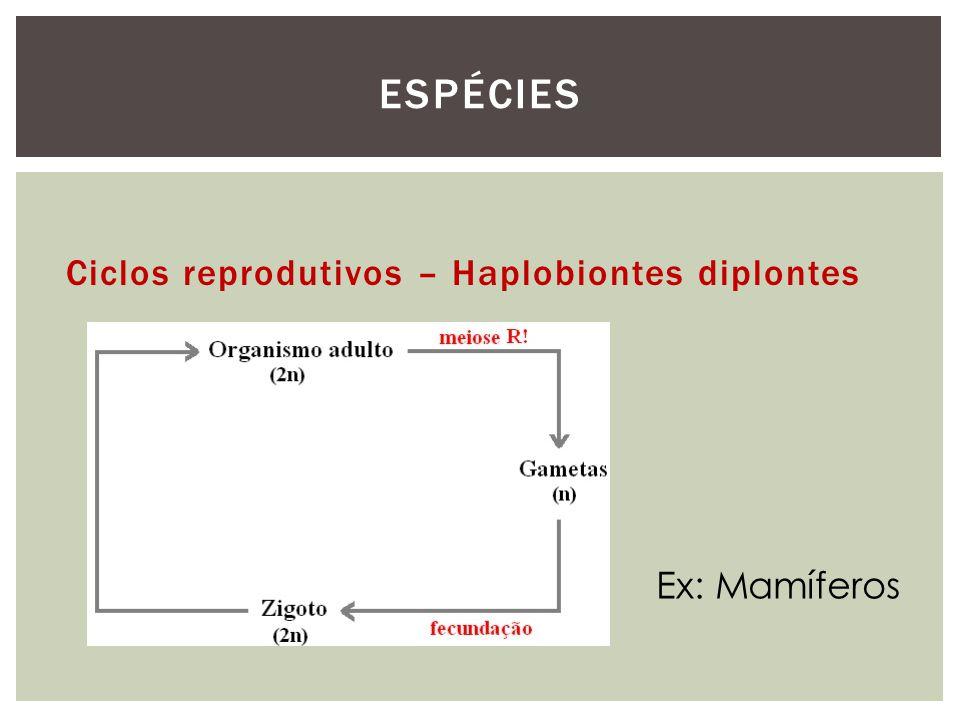 Ciclos reprodutivos – Haplobiontes diplontes ESPÉCIES Ex: Mamíferos