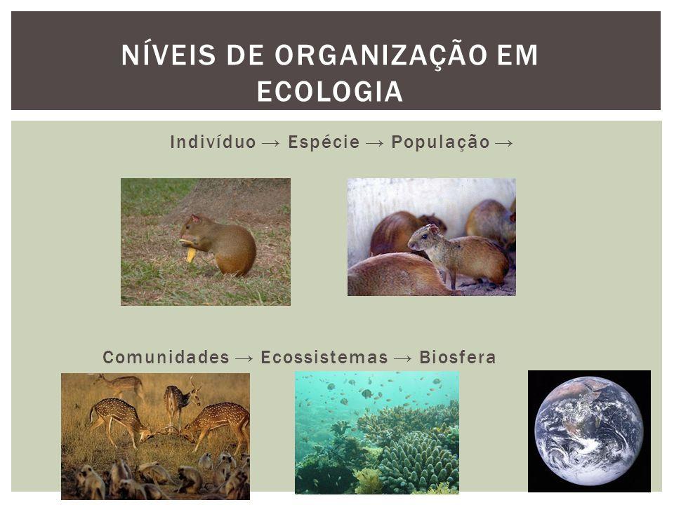 Indivíduo Espécie População Comunidades Ecossistemas Biosfera NÍVEIS DE ORGANIZAÇÃO EM ECOLOGIA