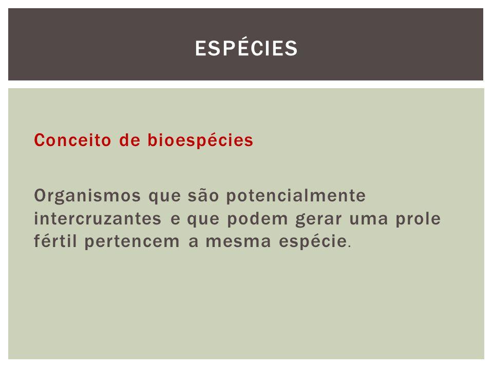 Conceito de bioespécies Organismos que são potencialmente intercruzantes e que podem gerar uma prole fértil pertencem a mesma espécie. ESPÉCIES