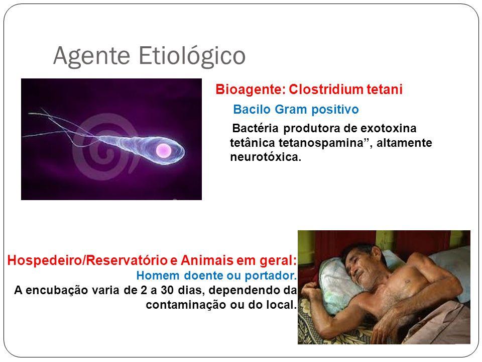 Agente Etiológico Bioagente: Clostridium tetani Bacilo Gram positivo Bactéria produtora de exotoxina tetânica tetanospamina, altamente neurotóxica. Ho