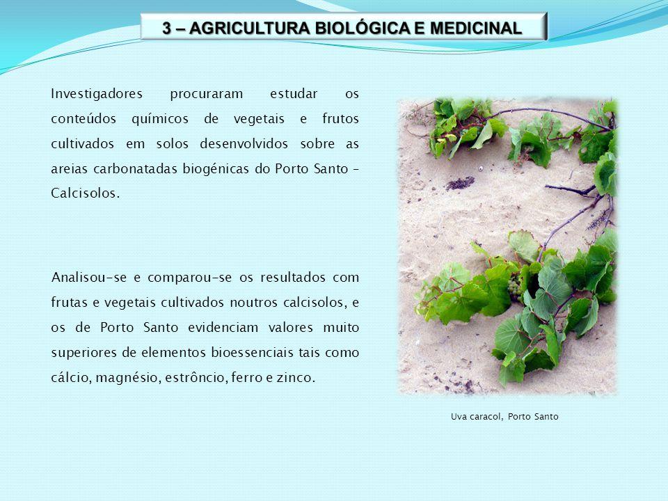 Investigadores procuraram estudar os conteúdos químicos de vegetais e frutos cultivados em solos desenvolvidos sobre as areias carbonatadas biogénicas