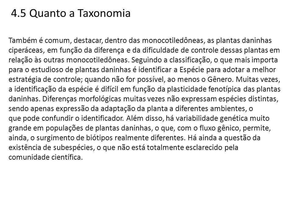 4.5 Quanto a Taxonomia Também é comum, destacar, dentro das monocotiledôneas, as plantas daninhas ciperáceas, em função da diferença e da dificuldade