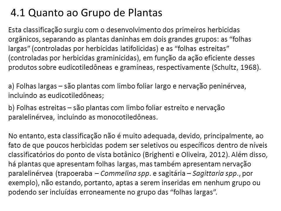 4.1 Quanto ao Grupo de Plantas Esta classificação surgiu com o desenvolvimento dos primeiros herbicidas orgânicos, separando as plantas daninhas em do