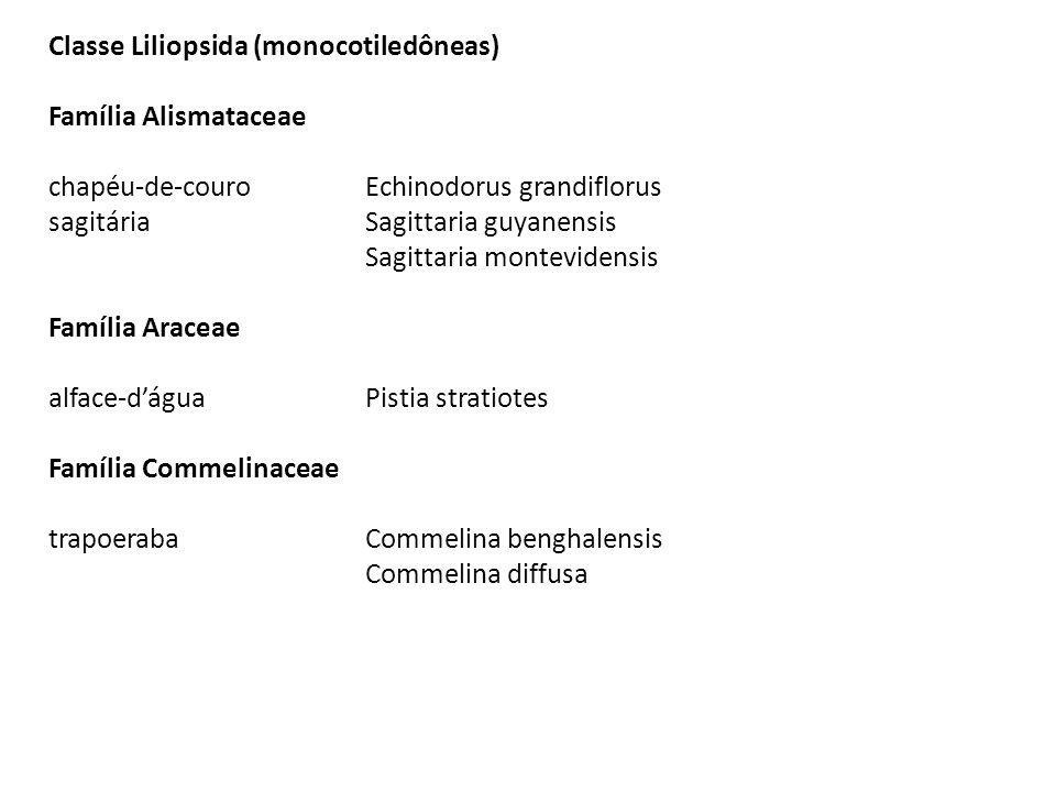Classe Liliopsida (monocotiledôneas) Família Alismataceae chapéu-de-couro Echinodorus grandiflorus sagitária Sagittaria guyanensis Sagittaria montevid