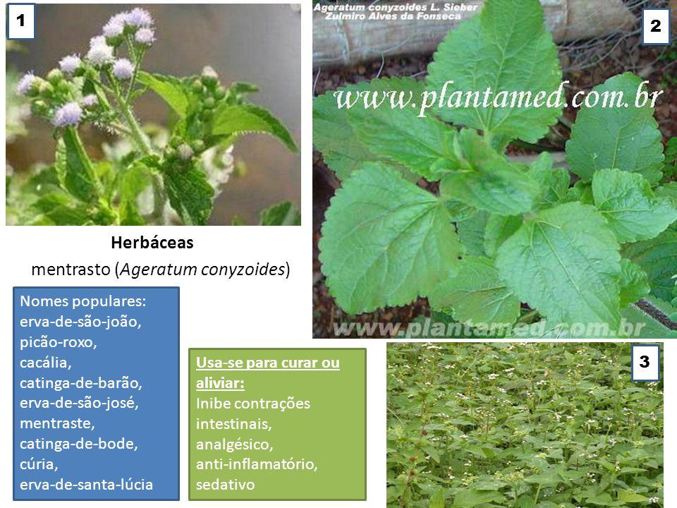 Herbáceas mentrasto (Ageratum conyzoides) Nomes populares: erva-de-são-joão, picão-roxo, cacália, catinga-de-barão, erva-de-são-josé, mentraste, catin